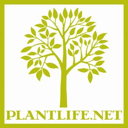 Plantlife Natural Care Products - Aromatherapy Soap, Essential Oil, Bath Salt, Massage Oil and more