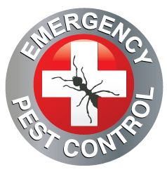 Emergency Pest Control of New Rochelle